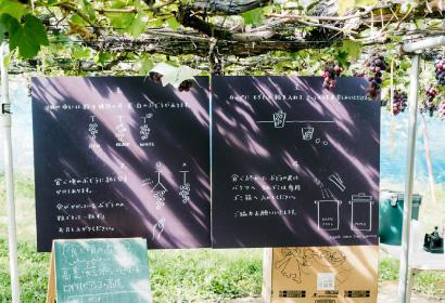 カラフルぶどう園の紹介